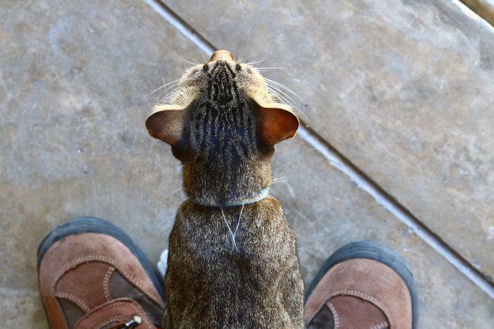 One Animal Animal Themes Mammal Domestic Animals Pets Domestic Cat Cat♡ Cat Close-up Nature