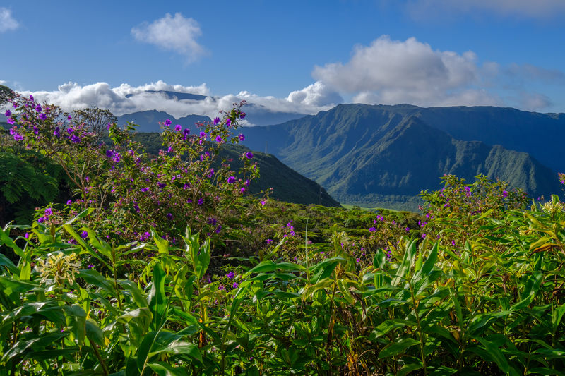 Beauty In Nature Cloud - Sky Col De Belle Day Growth La Réunion  Landscape Mountain Mountain Range Nature No People Outdoors Reunion  Reunion Island Scenics Sky Tranquil Scene Tranquility Tree