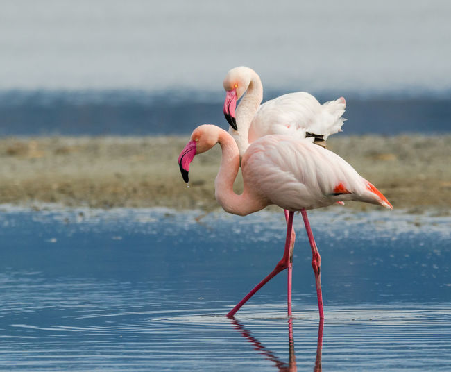 Animal Themes Animals In The Wild Beak Bird Carefree Childhood Day Flamingo Focus On Foreground Fun Innocence Nature No People One Animal Outdoors Side View Two Animals Weekend Activities Wildlife