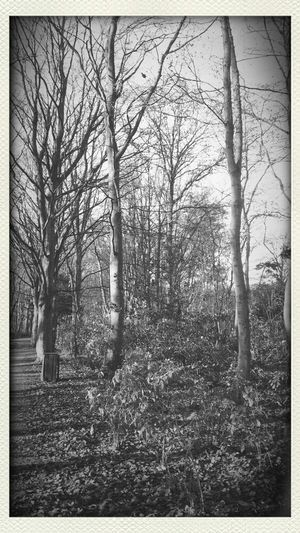 Hanging Out Relaxing Nature Blackandwhite Taking Photos Monochrome