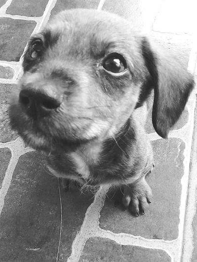 My Little Puppy Happy Milou Love My Little Doggie <3