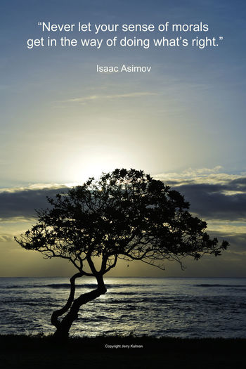 It's the birthday of #IsaacAsimov, sci fi writer, and we use a tree on #Kauai silhouetted against #sunrise to celebrate with one of his better quotes. If this #quotograph speaks to you, please #repost it. Asimov Hawaii Isaac Asimov Kauai Tree Quote Quotograph Sunrise