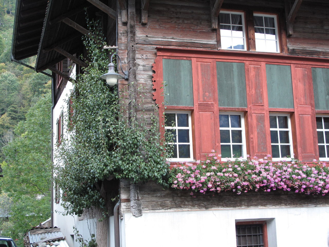 building exterior, architecture, built structure, growth, flower, plant, window, house, outdoors, no people, nature, day, window box, low angle view, ivy, beauty in nature, fragility