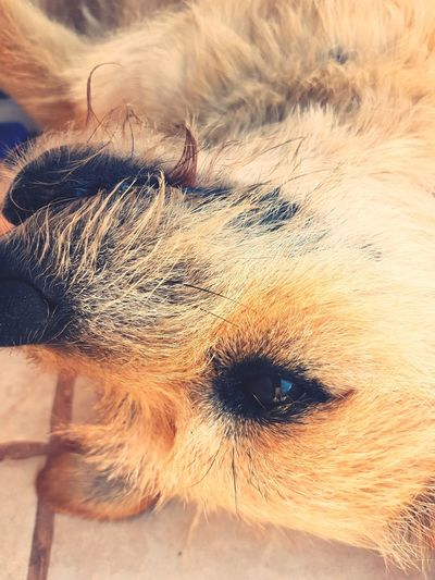 EyeEm Selects Dog Love Dog Live Outdoors Pets Day Beauty In Nature