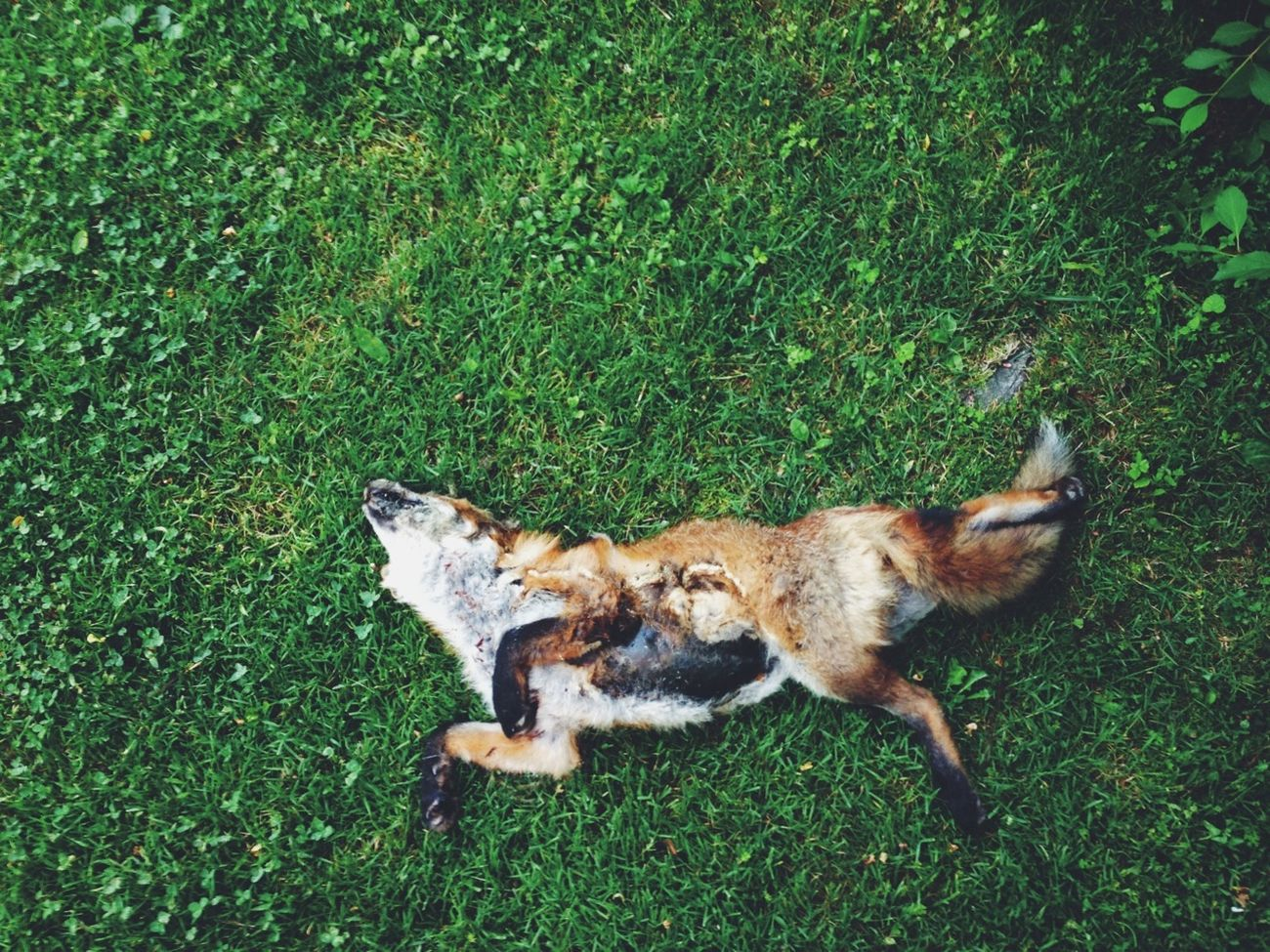Animals Dead