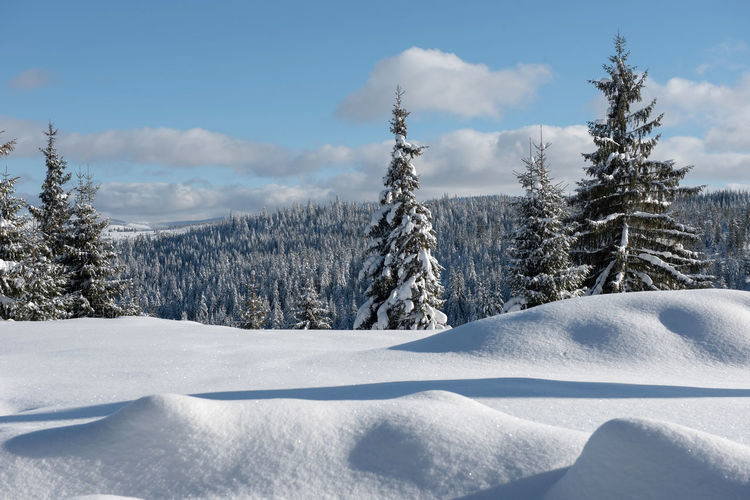Snow covered pine trees on field against sky
