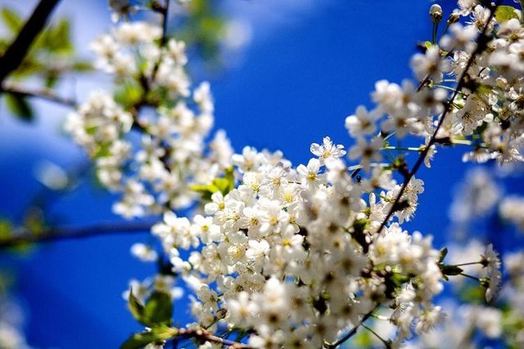 весна временагода цветавесны небо пятьдесятоттенков голубогоцвета когдацветутсады фотография фотонастроение яжфотограф Spring Seasons Sky Colorsnature Blue Flowers Photo Photomood Ilike it