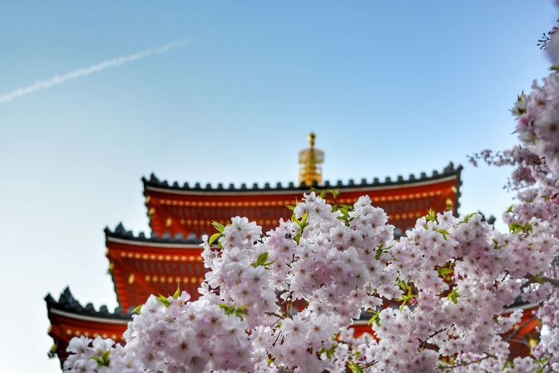 Low angle view of cherry blossoms by building against sky