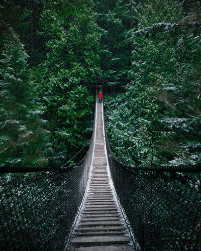 Man Walking On Rope Bridge Amidst Trees In Forest