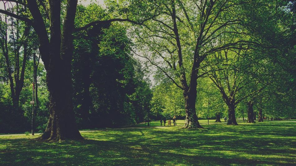 In the park Nostalgic  England Cambridge Vintage Retro Environment Tree Plant Green Color Beauty In Nature Land Growth Nature Tranquility Tranquil Scene Tree Trunk Day Sunlight Trunk Park Scenics - Nature Outdoors Field Grass