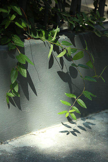 City Green And Grey Liana Nature Paris, France  Plant Sunbeam Survival Tranquility Wall