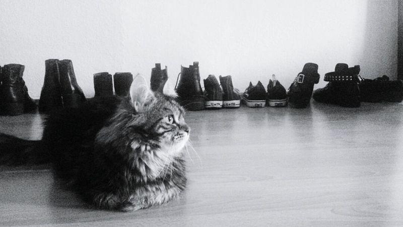 All my friends are heathens take it slow. Tranquility Silence Cat Pets Animal No People Goth Gothic Lifestyle Minimalism Minimalistic EyeEm Best Shots EyeEmNewHere First Eyeem Photo EyeEm Best Edits EyeEmBestPics