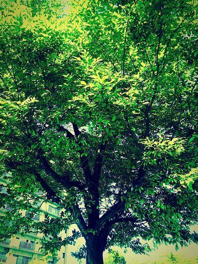 公園の木!夏だねー!!!