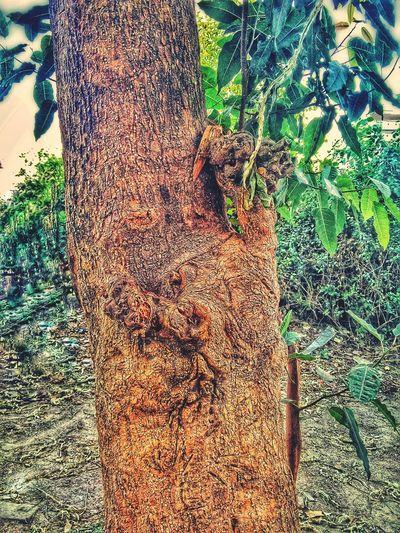 Close-up of ivy on tree