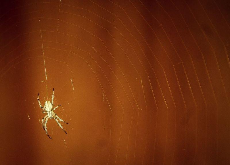 Spider Spider Web Spider Silk Spider's Web Spiderworld Indoor Photography Indoors  Spider At Work Spider At My Desk
