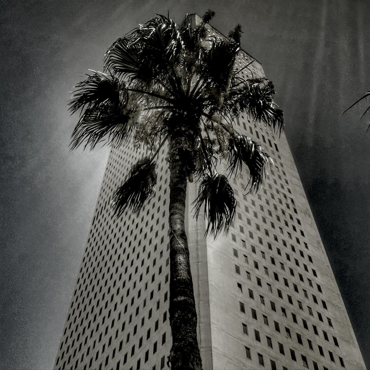 palm tree, low angle view, tree, tall - high, tree trunk, built structure, tall, architecture, outdoors, building exterior, no people, day, travel destinations, sky, growth, skyscraper, city, nature