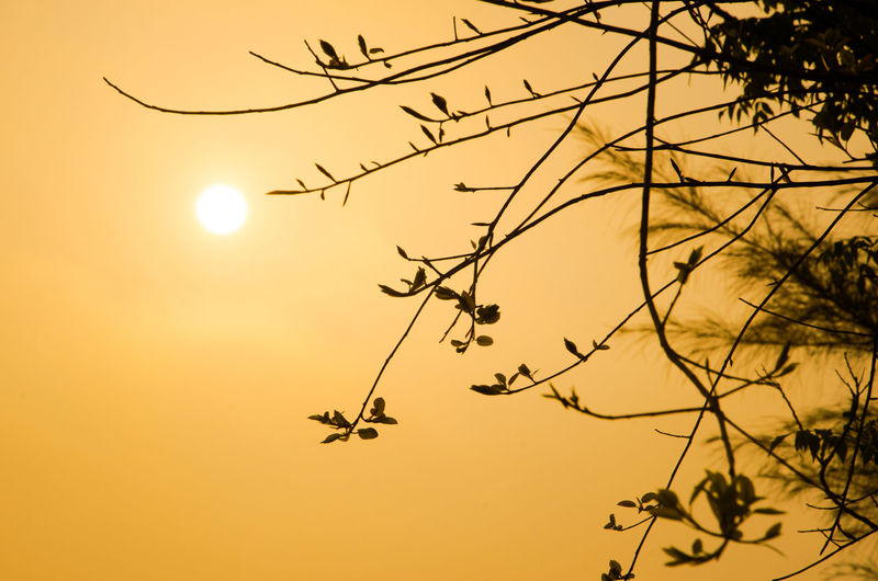 Beauty In Nature Branch Growth Idyllic Low Angle View Moon Nature No People Orange Color Outdoors Plant Scenics - Nature Silhouette Sky Sun Sunset Tranquil Scene Tranquility Tree Vertebrate