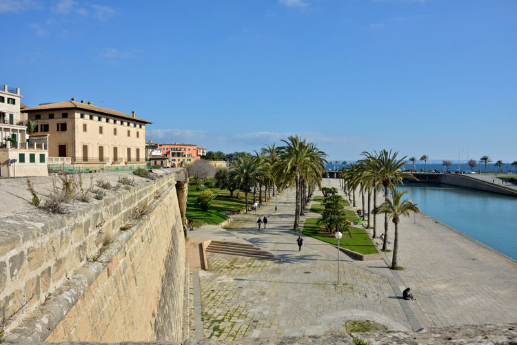 Palma di Maiorca cityscape with buildings and palm trees near the sea Palma De Mallorca SPAIN Architecture Building Exterior Palm Tree Tropical Climate City Outdoors Nature Highlights Plant Cityscape City Sky Tree Canal Water Sea Travel Destinations Sunlight Building