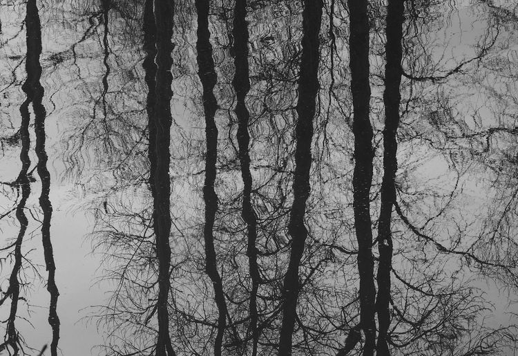 Tree reflections in Delta Pond. Delta Ponds Reflection_collection Reflection Trees Trees And Water Blackandwhite Photography Black & White Squiggly Lines Abstractions Abstract Nature Abstract Noir Abstract Backgrounds Showcase: February Water Reflections EyeEm Nature Lover