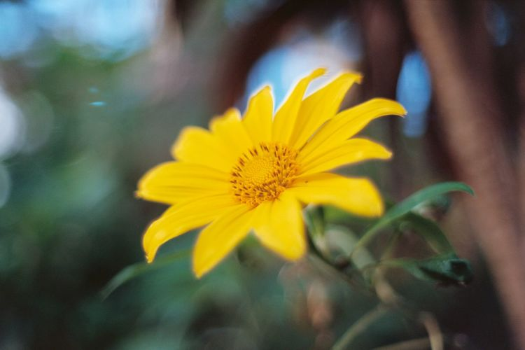 Close-up of yellow flower blooming outdoors
