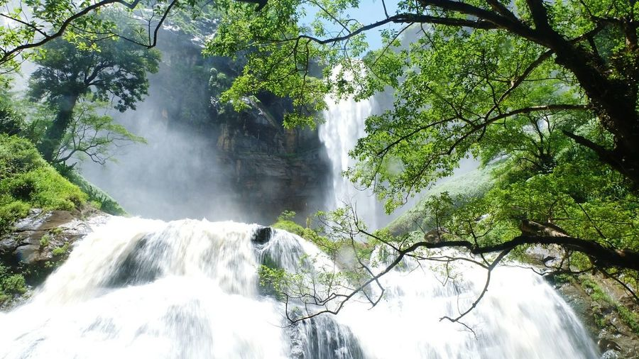 Low angle view of waterfall in forest