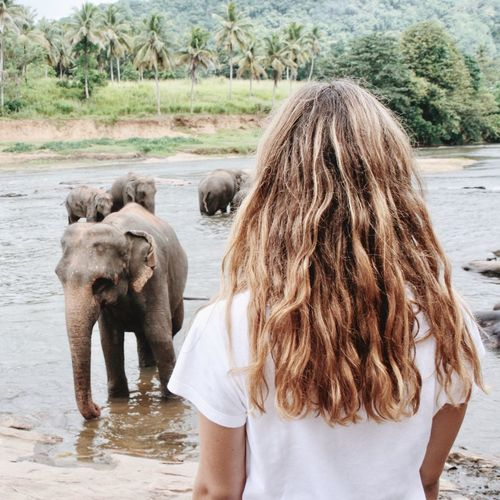 Rear view of young woman looking at elephants at lakeshore