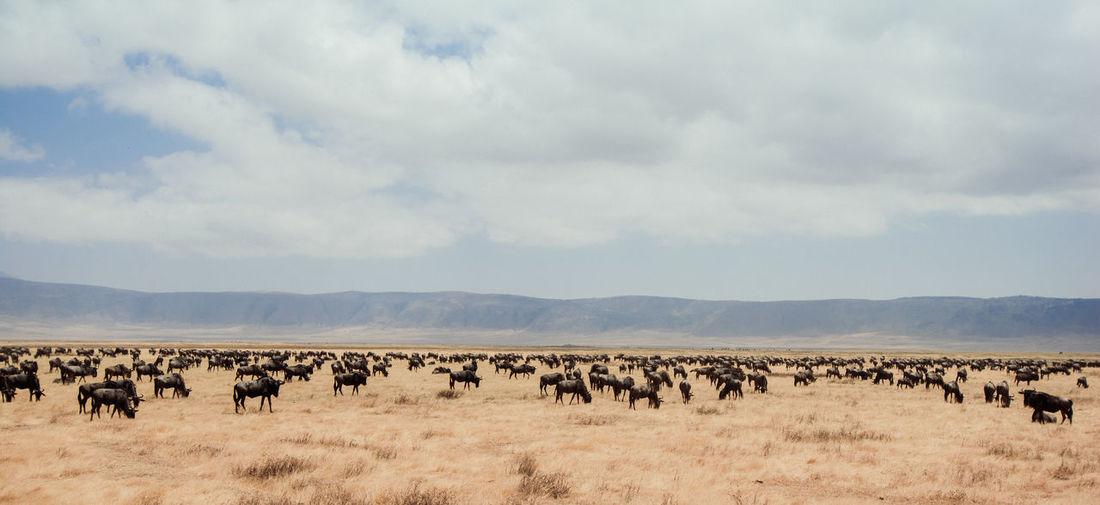 Animals on landscape against sky