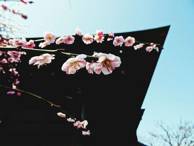 Smart Simplicity Look Up Kyoto Japan 日本 京都 桜 Sakura Holiday Spring