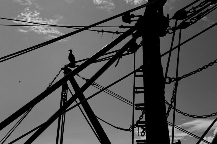 Gabbiano porto san Benedetto del Tronto Cable Connection Electricity  Low Angle View Power Supply Bird Animals In The Wild Perching Power Line  Technology Silhouette Complexity Animal Themes Outdoors Electricity Pylon Animal Wildlife Day Fuel And Power Generation No People Telephone Line