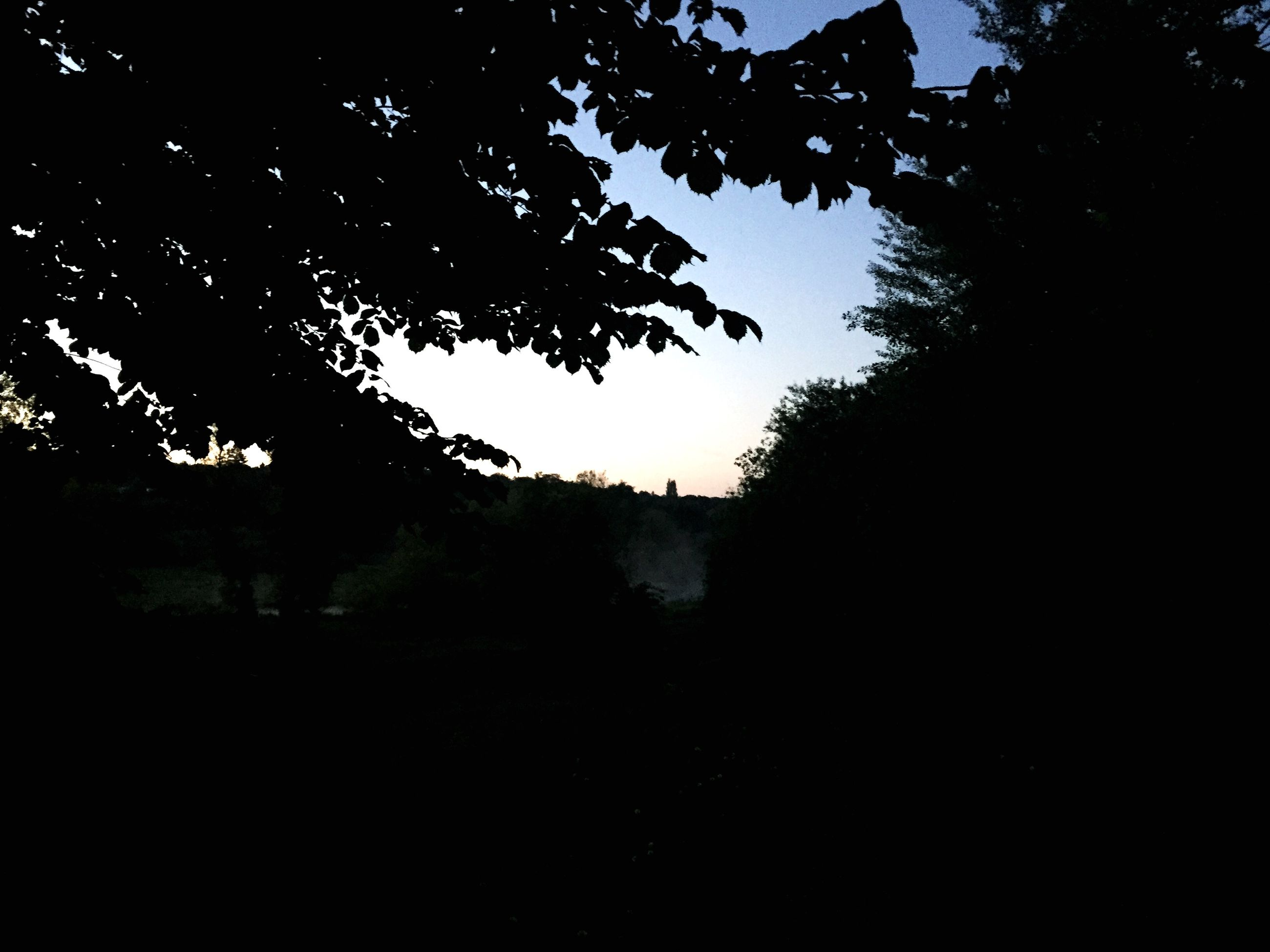tree, silhouette, tranquility, clear sky, branch, tranquil scene, nature, growth, beauty in nature, scenics, dark, copy space, sky, sunset, dusk, outline, idyllic, no people, outdoors, low angle view