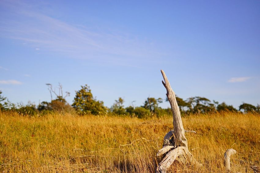 Unfriendly habitats Nature Field Tree Outdoors Tree Trunk No People Savage Landscape Eternity Tranquility Green Yellow Sony A6000 EyeEm Nature Lover Tranquil Scene Tranquility Agriculture Beauty In Nature