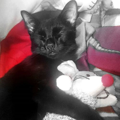 Ssssshhhhhh...... Catlovers Catofinstagram Bestmeow Meowbox Meow Topcatphoto Topphotos Kittensofinstagram Kittens Excellentcats Bestcats_oftheworld Photooftheday Picoftheday Lovecats Like4like