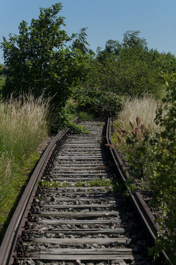 View of railroad tracks along trees