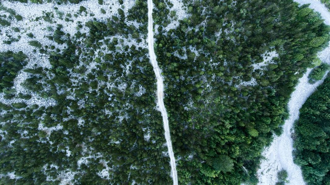 Green Color Growth Water Nature Tree Day Outdoors Spraying No People Low Angle View Motion Plant DJI Phantom 4 Droneshot Nature Outdoors Wilderness Field Landscape Beauty In Nature Freshness Close-up