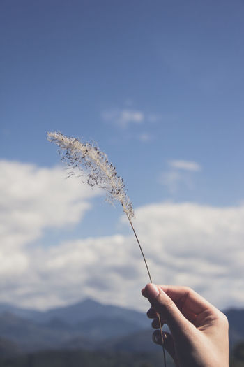 Close-up of person holding twig against sky