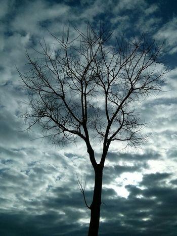 Solitude Winter Tree Skyandclouds  Nofilter#noedit