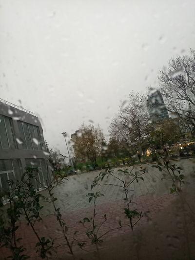 Tree Water Wet