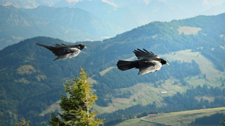 High angle view of birds flying over mountains