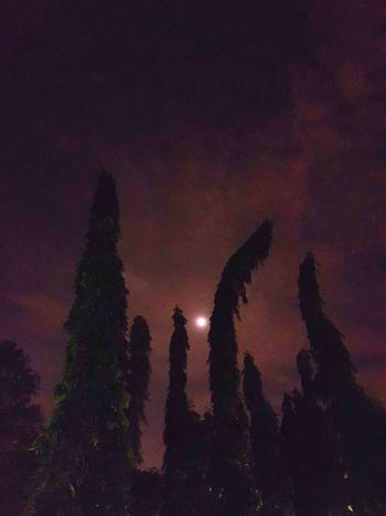 Night Nature Beach Moonlight