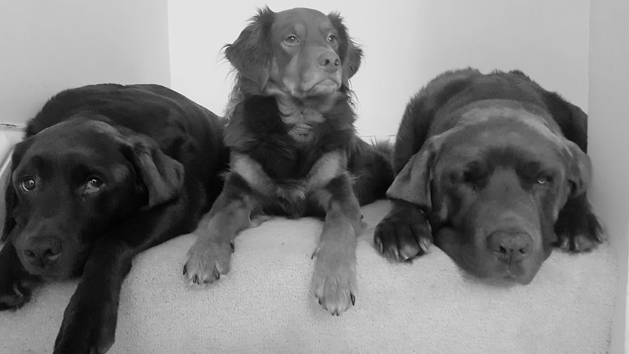 The Gang! Animal Pets Dog No People Portrait Domestic Animals