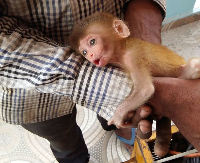Cute Monkey Portrait Bed Low Section Baby Close-up Kitten Newborn Babyhood Pet Bed Young Animal 0-11 Months 0-1 Months Toe Going Remote EyeEmNewHere Focus On The Story