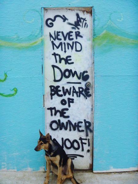 Beware of the owner... Capture The Moment Pets Mascotas Dogslife Dog Doglover Adoptanocompres AdoptDontShop