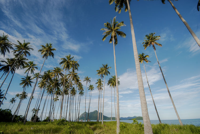 The Beauty of Maiga-Sipadan Island in Borneo, Malaysia. Beach Coconut Trees Day Island Mabul Maiga Island Natural Natural Beauty Nature Sabah Borneo Sand Scenics Seagypsy Seascape Semporna Sibuan Island, Sky Tranquil Scene Tranquility