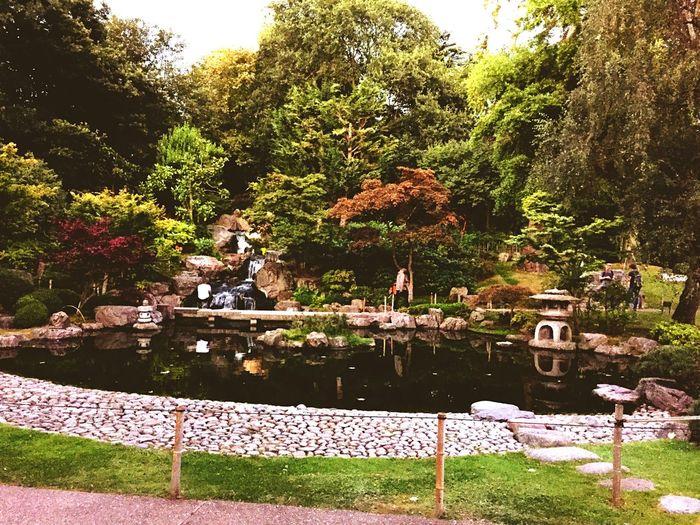 Kyoto Gardens, Holland Park Japonesegarden Hollandpark London First Eyeem Photo Kyotogardenslondon