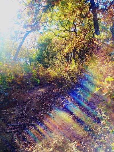 Autumn Colors Beautiful colours and sun glares.. :) Nice Views Nature On A Hike