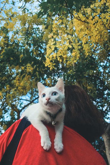 Portrait of a cat sitting on a tree