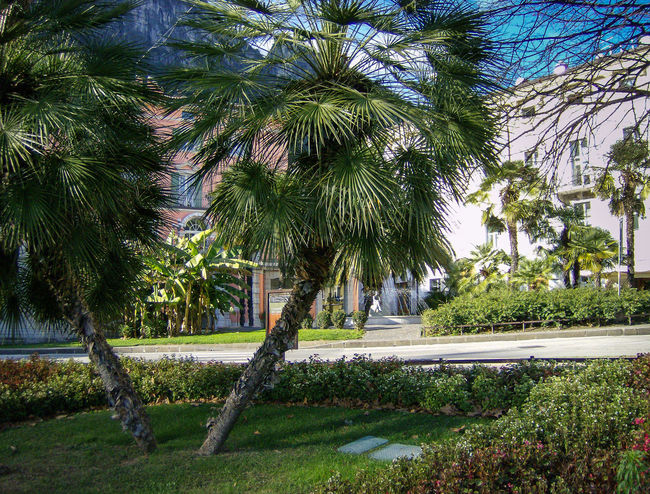 italia Alberi Bäume Day Erba Grass Green Color Growth Italia Italie Italien Italy Italy❤️ Italy🇮🇹 Nature No People Outdoors Palm Tree Palme Palmen Piazza Rasen Square Tranquility Tree Trees