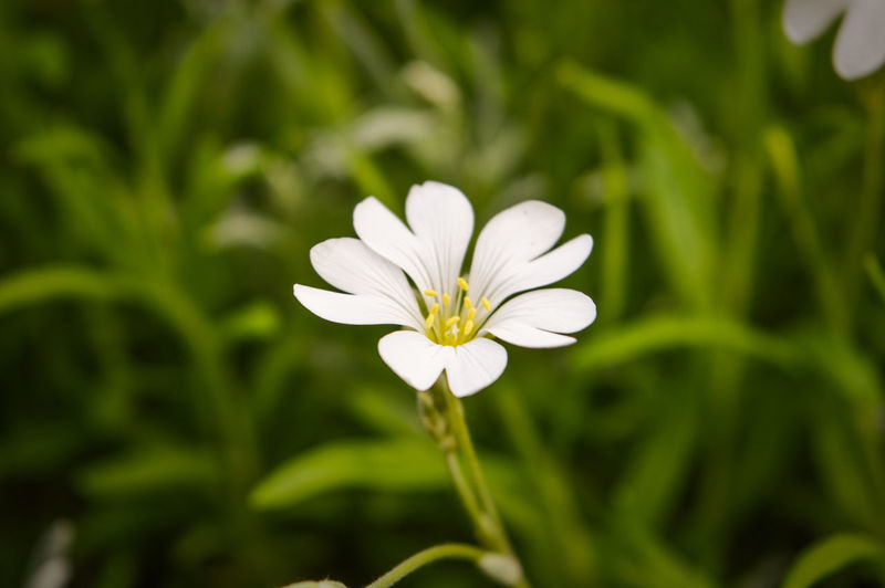 Beauty In Nature Close-up Day Flower Flower Head Fragility Freshness Growth Nature No People Outdoors Petal Plant White Color