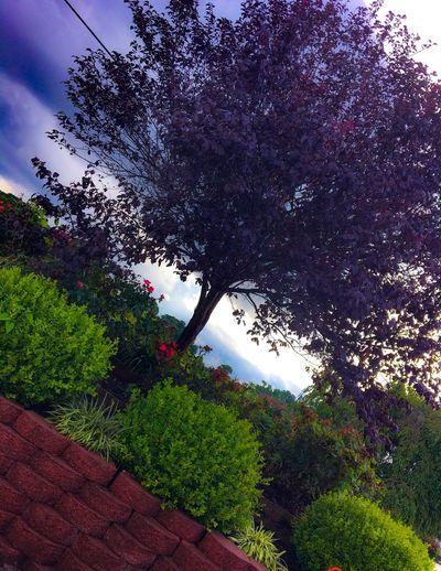 Tree Growth Low
