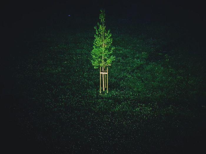 tree Sadness